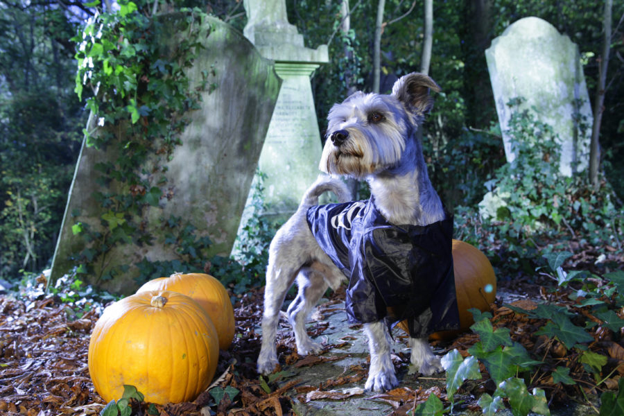 dog halloween outfit 12 - small